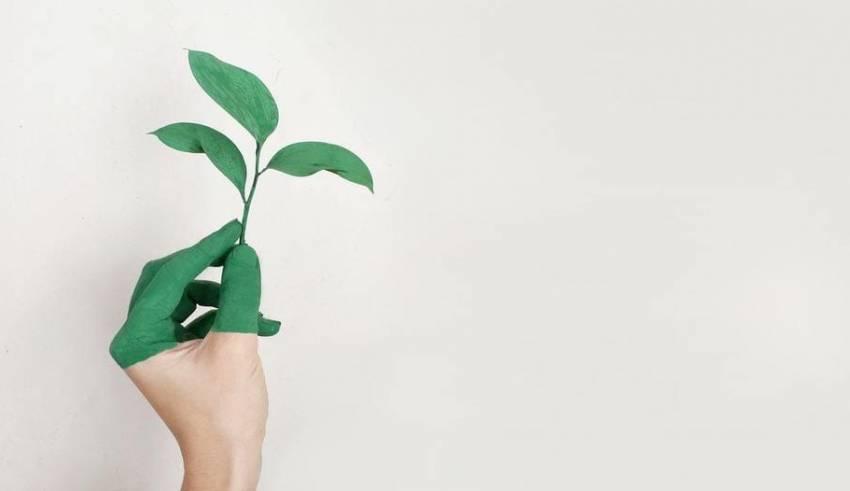 coltivazioni redditizie - MyOhana.it